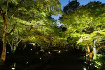 東福寺ライトアップ 拝観券付き宿泊プラン(画像)